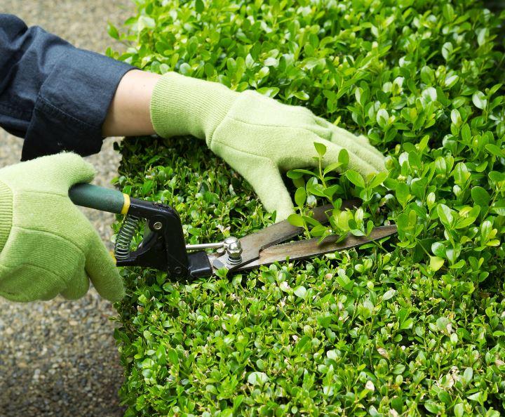 Manutenzione giardini venezia camponogara foss for Manutenzione giardini