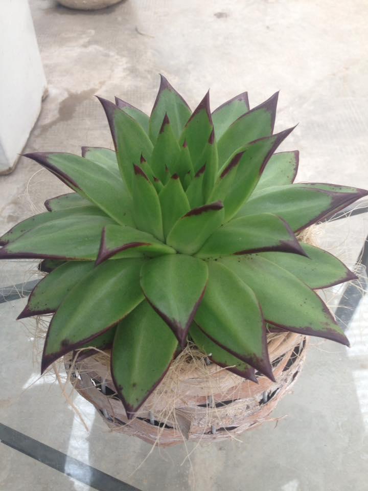 Vendita piante ornamentali per la casa vicenza creazzo for Vendita piante ornamentali