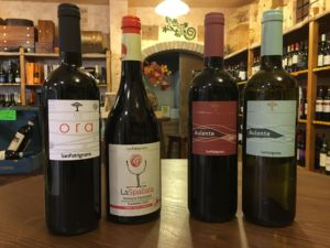 Vini San Patrignano – Enoducale – Ferrara
