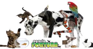 Articoli per la cura degli animali – Vicenza – Castelgomberto – Agraria Fortuna