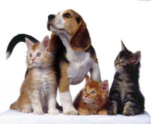 Toelettatura e articoli per animali – Vicenza – Altavilla Vicentina, Creazzo, Sovizzo – Pelo e Contropelo