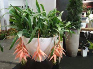 Assortimento di piante da esterno e interno – Camponogara, Fossò – Venezia – Vivai Barendi