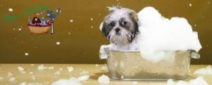 Novità trattamento all'ozono per cani – Vicenza – Altavilla Vicentina, Creazzo, Sovizzo – Pelo e Contropelo